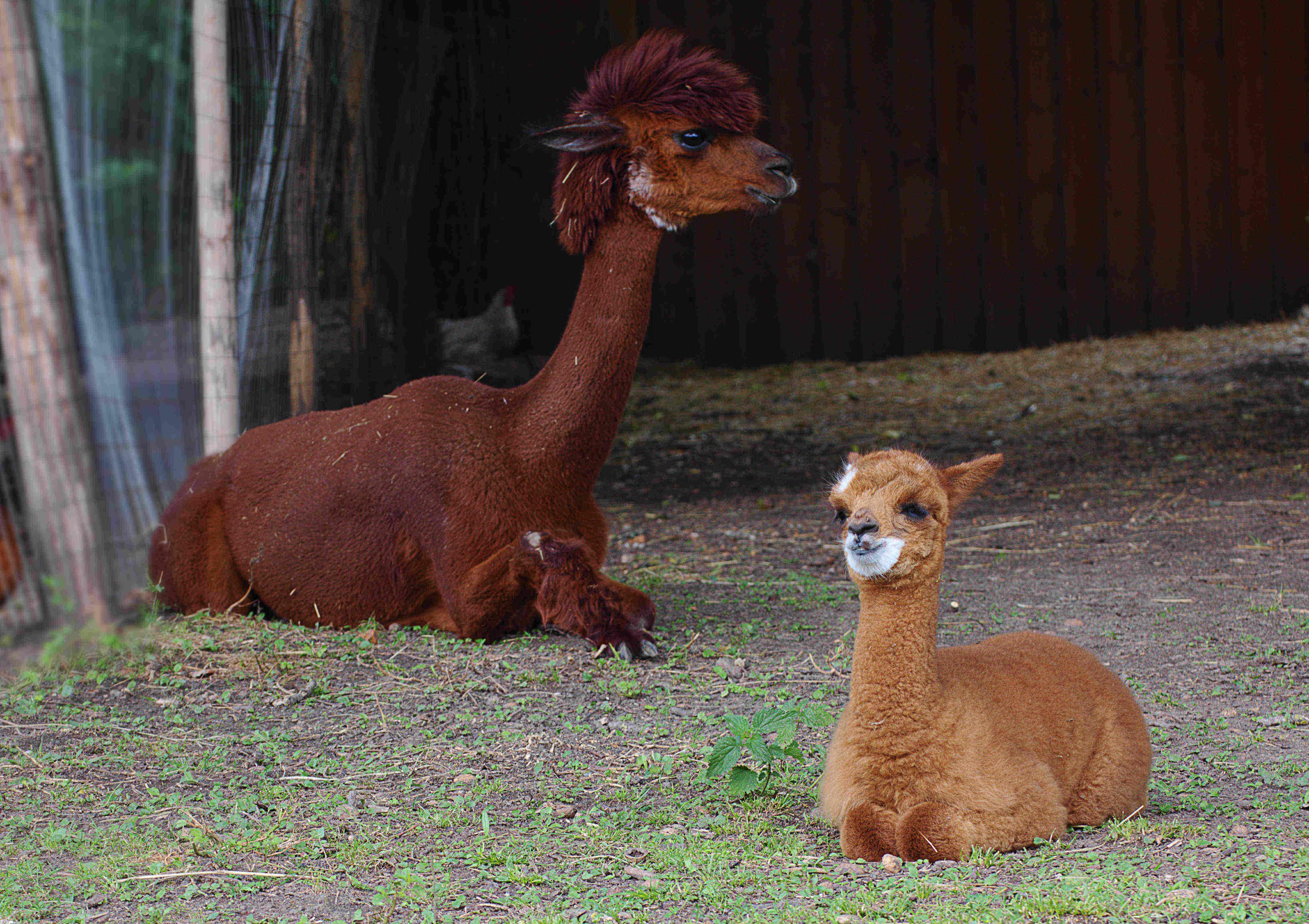 Stella und Felicia kurz nach der Geburt