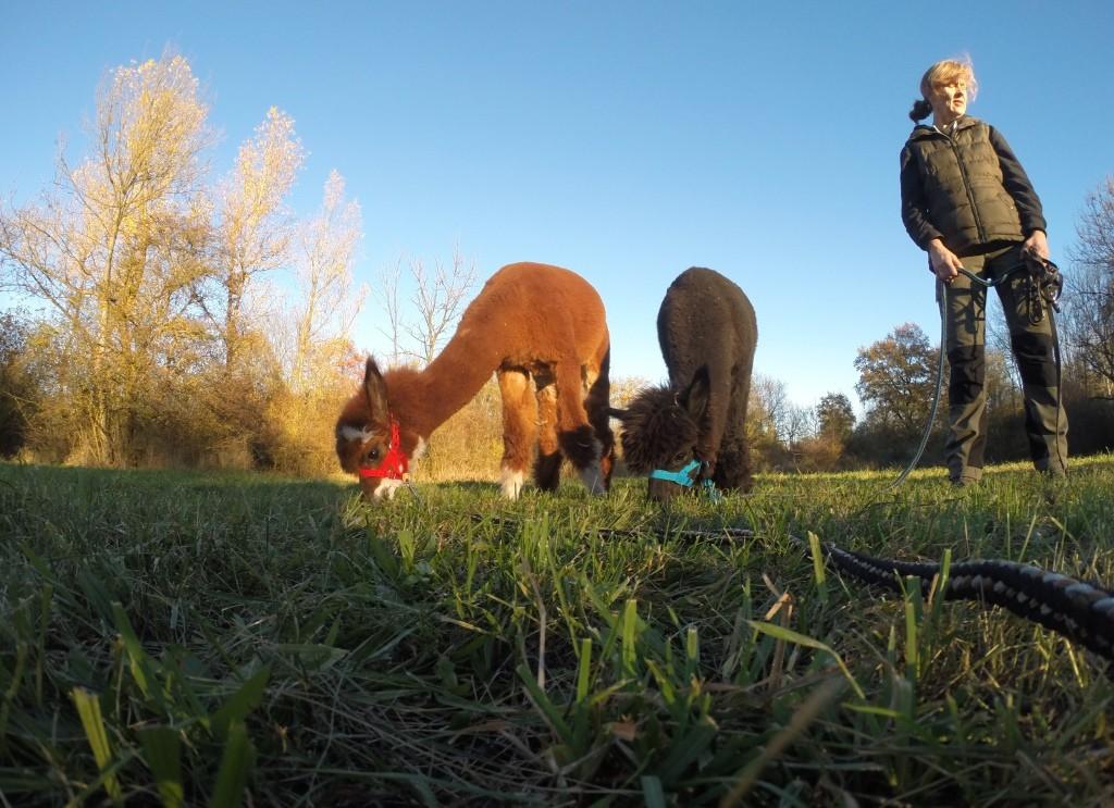 Sonniger Herbstspaziergang mit Sancho und Monte Cristo